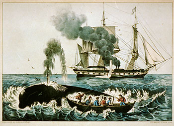 image of attack_right_whale