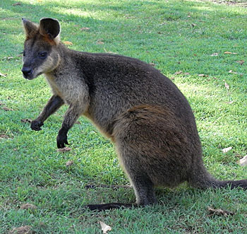 ** Not Found: /note/views/wallaby.jpg